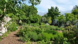 TESORA INTERVIENT POUR LES MURS A PECHES DE MONTREUIL, AGRICULTURE URBAINE